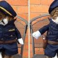 Кошка спасла жизнь человеку — и стала шерифом
