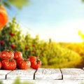 Kuidas valmistada tomatile kasulik lahus ehk doping