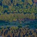 Kultuuritegelased pöördusid Eesti metsa päästmiseks riigijuhtide poole
