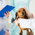 Vähk on üks levinumaid surmapõhjuseid ka lemmikloomade seas: loomaarst Tiina Toomet annab nõu
