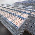 Tere и Farmi объединились в единый молочный концерн
