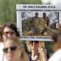 Head uudised! Teated lõvi Cecili venna surmast osutusid siiski kuulujutuks