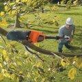 Kõrglõikur säästab redelitel turnimisest, kui on tarvis õunapuid lõigata või teele valguvat alleed kärpida.