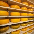 Arkna mõis, MTÜ Arkna Terviseküla, juust, juustukoda
