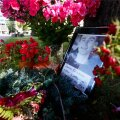 Vabaduse väljakule paigutati Jaanus Käärmanni pilt ja lilled