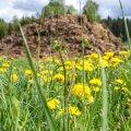 Igor Taro: Eesti kasvuks on vaja maapiirkonna sõnnikut, mitte linnriigi ummikut