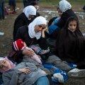 Itaalia võib hakata põgenikke maffiabosside kodudesse paigutama