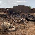 10. juulil Malis nõudis rünnak dogoni rahva külale 95 inimelu. See leidis aset. Paar kuud varem oli dogoni grupeering tapnud üle 100 fulaani külaelaniku.