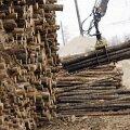 Narva elektrijaamades hakkpuidu põletamine ergutab Eesti majandust