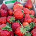Soome maasikapõldudel on eestlased hakanud ukrainlaste ülemusteks