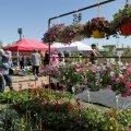 Menukas Türi lillelaat toimus viimati 2019. aastal.