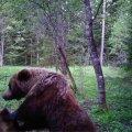 Karu Sõmeru metsas