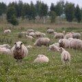 Seeder: usuline ühendus võib loomi tappa ainult oma tarbeks