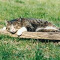 Loomad teavad, et magamine on vajalik.