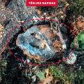 FOTO | Metsamees jäi napilt ellu: harvesteri ette sattus granaat