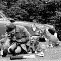 Корги всю жизнь сопровождают королеву Елизавету. Этот снимок сделан в 1973 году