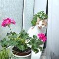 Kui kass taimi närima kipub, tuleks need teha talle vastikuks nii lõhnalt kui maitselt.