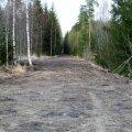 Pärast raietöid hakati riigimetsas segi pööratud metsasihte siluma.