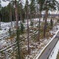 Vallamaja kõrval asuv RMK majandatav mets võeti parasjagu nii hõredaks, et uued taimed kasvama saaks hakata, kuid jäeti alles ka vanu puid, mille all on tore jalutada.