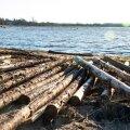 Sõrulased veavad juba mitmendat päeva kodudesse Jämaja juures randa uhutud suurt puidulasti, mis pärineb ilmselt möödunud kuu lõpus Läänemerel osa oma lastist kaotand Leedu laevalt Afalina.