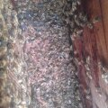 Surnud mesilased Lääne-Virumaal