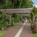 Meelte aia ringkäik saab alguse Elu teest, kus külastajaid tervitab ka suurte lehtedega Jaapani banaan.
