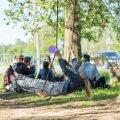 Linnavõim paneb aktivistid paika: puukallistajate tants ümber hõberemmelga on mõttetu!