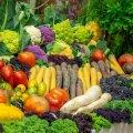 Ilumäe talu viljad kasvavad rokkmuusika saatel