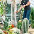Harri Poomi kaktusekogu hävis tules
