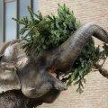 Berliinis üle jäävad jõulukuused panevad nahka loomaaia elevandid