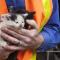 Hidden Valley Lake'ist päästetud loomad