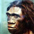 John Gurche`i loodud Homo Erectuse rekonstruktsioon Smithsoniani loodusajaloo muuseumis Washingtonis.