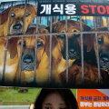 Koeraliha vastane meeleavaldus Lõuna-Koreas