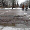 Tallinna teeaukude lappimiseks kulub miljoneid