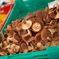 Миколог рассказал, почему старыми грибами можно отравиться