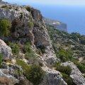 Taimed on Maltal roninud ka kõige kivisematele saare nurkadele.