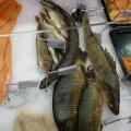 Lugejas küsimusi tekitanud kalad