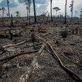 Macron: G7 riigijuhid on lähedal kokkuleppele Amasoonia metsapõlengutega võitlemise abiplaani kohta