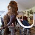 Studio Viridises valmistatakse mammuti mulaazi