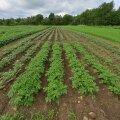 Pestitsiidide vastu võitleja kutsuti põllumajandusametisse ülekuulamisele
