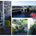 В преддверии нового конкурса жителям Ласнамяэ расскажут о секретах озеленения балконов