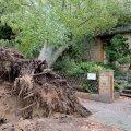 FOTOD | Põhja- ja Ida-Saksamaa tormis hukkus vähemalt seitse inimest
