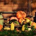 13. JA REEDE | Milliste toitudega ei tohi täna libastuda ja mida peab kindlasti sööma?