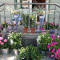 FOTOD: Märjamaa alevi peatänavat kaunistab imeilus lilleaed
