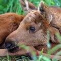 Inimesed on üha enam hakanud teatama nii vigastada saanud kui lihtsalt õnnetuna näivatest loomadest.