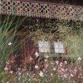 Kalevikepi ja kõrreliste kaunis loor varjutamas vaadet talule.