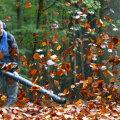 Сдуватель опавшей листвы — вынужденный помощник превратился в кошмар для жильцов