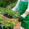 Флористика для чайников: азы ландшафтного дизайна для дачи