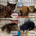 Pesaleidja kassiemmed
