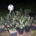 ФОТО | Полиция обнаружила во дворе дома плантацию конопли